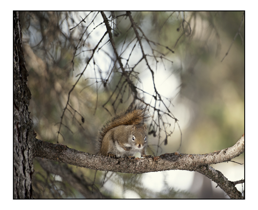 A Squirrel Enjoying An Unusually Warm Winter Day
